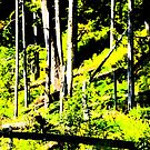 Rain Forest Trees by Alemay