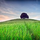 The Tuscany Chestnut tree by Vicki Moritz