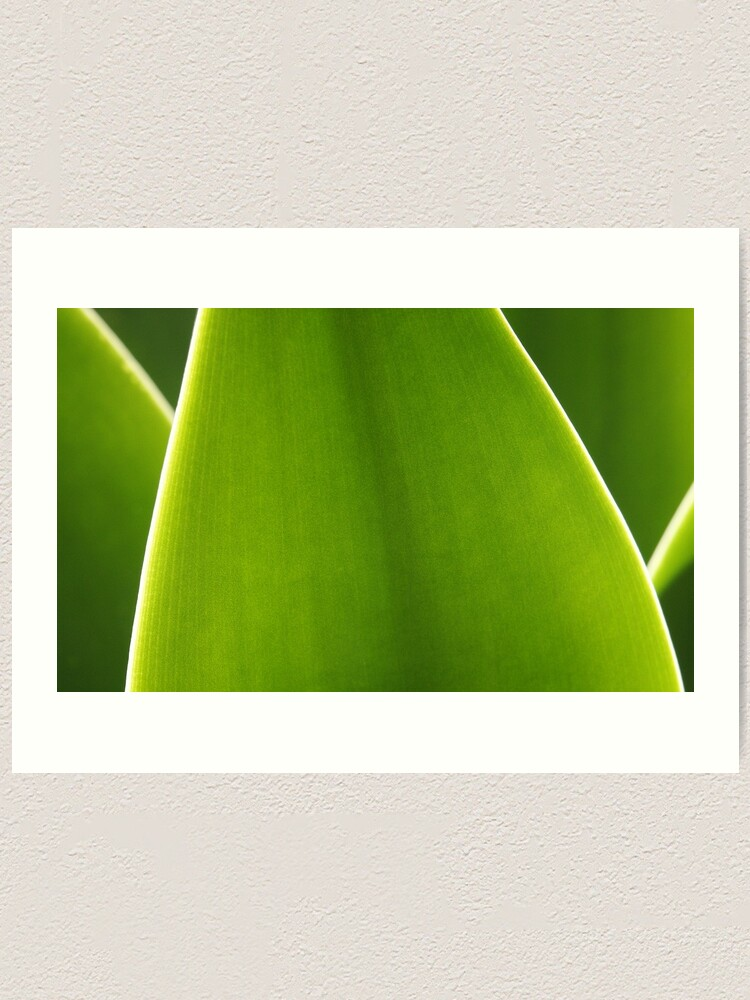 Alternate view of Agave Art Print
