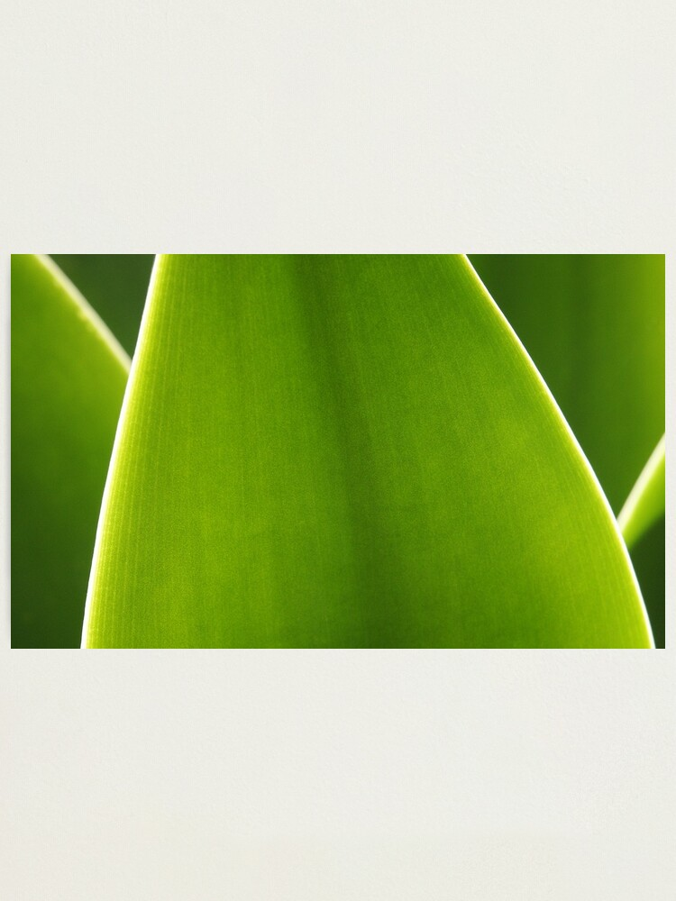 Alternate view of Agave Photographic Print