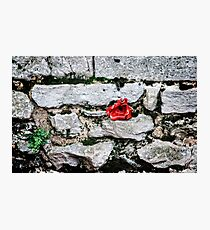 Tower of London Poppy artists exhibition... Photographic Print