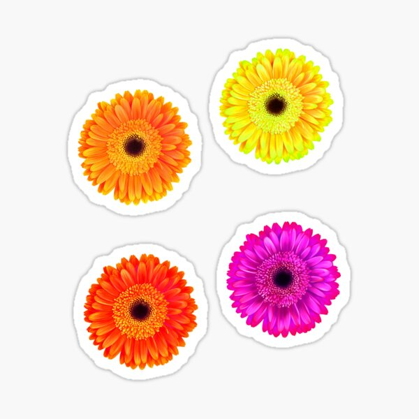 Gerbera Flowers in Purple, Red, Yellow and Orange Sticker