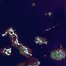 Galapagos Islands Ecuador Satellite Image by Jim Plaxco