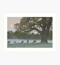 Full Moon - Bushy Park, London Art Print