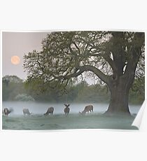 Full Moon - Bushy Park, London Poster