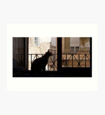 Gato urbano Art Print
