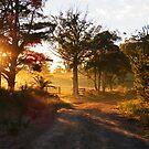 New Day Dawning by LenitaB