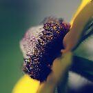 Yellow by lumiwa