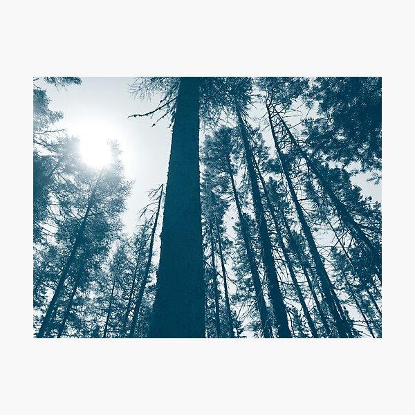 Forêt sauvage bleue, Quebec, Canada Impression photo