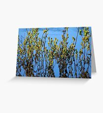 Bearberry and Its Reflection in a Beach Swale Greeting Card
