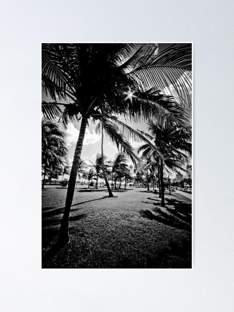 Miami Beach Morgen In Schwarz Weiss Poster Von Eyecbeauty Redbubble