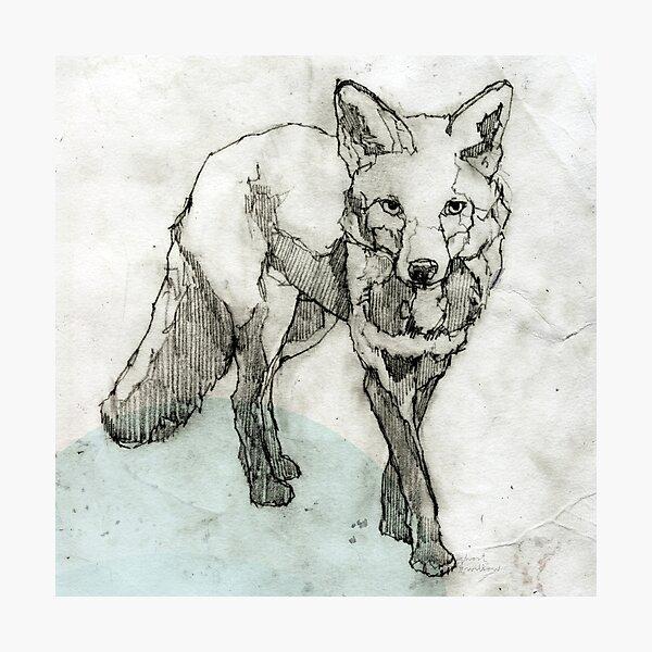 Fuchs Zeichnung Fotodruck