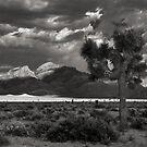 Tikaboo Valley by Daniel Owens