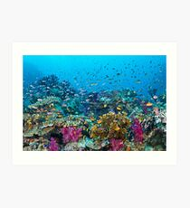 Fantasea Reef Art Print