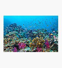 Fantasea Reef Photographic Print