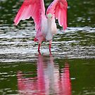 Reflections in Pink! by Anthony Goldman