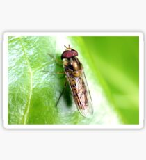 Hedgerow Insect Sticker