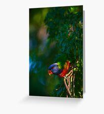 Rainbow Lorikeet (Trichoglossus haematodus) Greeting Card
