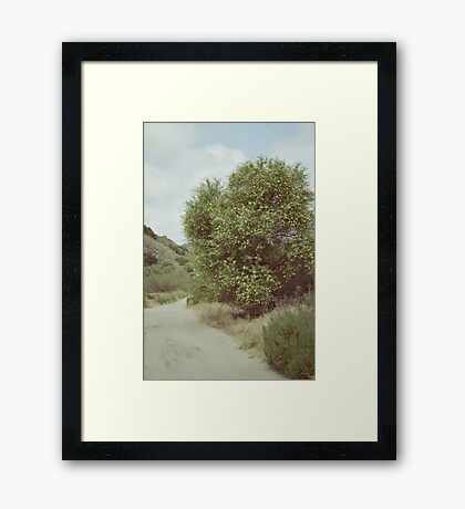 The Wishing Tree Framed Print