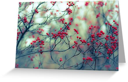 Winter Berries by A Barnes