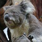 Koala by knelliec