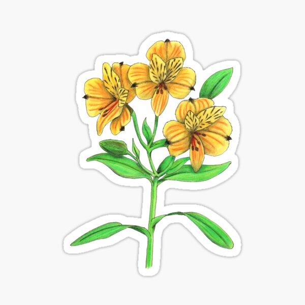 Peruvian Lily (Alstroemeria aurantiaca) Sticker