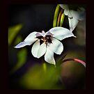 Bloom by AnneDB