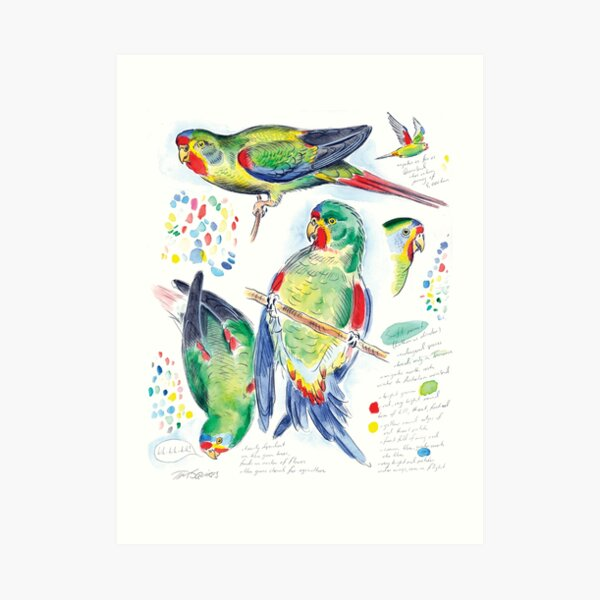 Swift Parrot Art Print