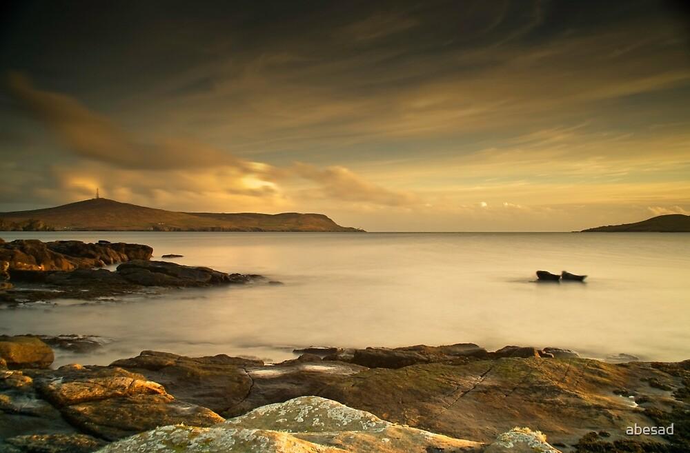 Two Seals in Lerwick, Shetland by Susan P Watkins