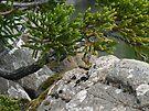 Flora at Hartz Mountains, Tasmania by BurrowsImages