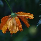 Drenched by Eileen McVey