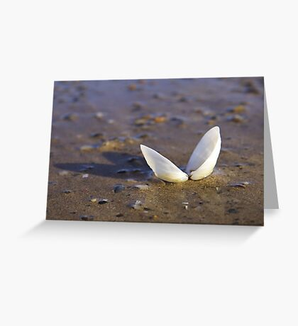 Cockle Shell  in Evening light at Fahan Greeting Card