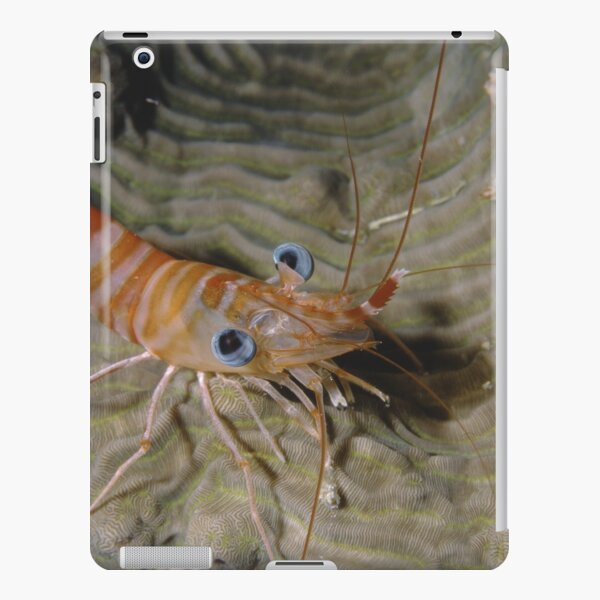 Prawn Portrait iPad Snap Case
