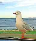 Silver Gull on the Mersey by Graeme  Hyde