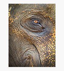 Close-up Elephant eye Photographic Print