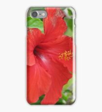 An Exotic Spring iPhone Case/Skin