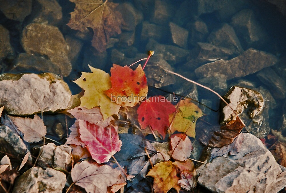 Fallen Leaves by brodrickmade