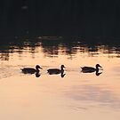 Sunset at a lake - 3 ducks on their way to hide out by Remo Kurka