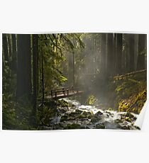 Bridge Through The Forest Poster