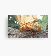 Hickory Horned Devil Metal Print