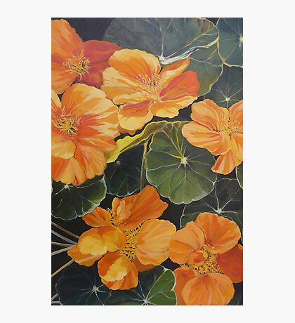 Nasturtiums. Acrylic on canvas.  Photographic Print