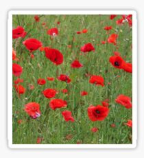 Field of poppies Sticker