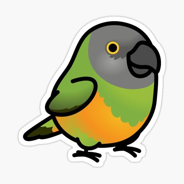 Chubby Senegal Parrot Sticker