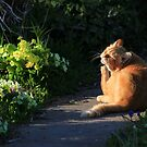 Ginger cat in garden at evening time by turniptowers