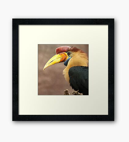 The beak makes the bird Framed Print