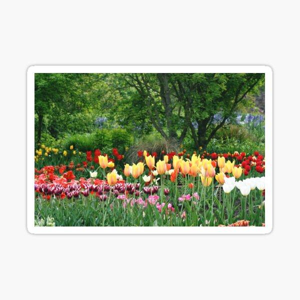 Colourful Tulips Sticker