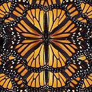 Monarch Butterfly Mandala by jenithea