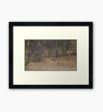 Jasper Coyote Framed Print
