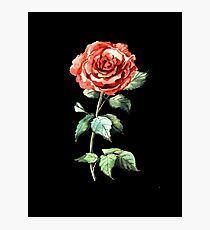 Watercolor rose Photographic Print