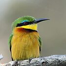 A Little Bee-Eater by Anthony Goldman